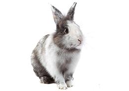 Gedragstherapie voor konijnen