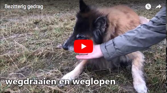 bezitterig video gedrag hond-gedragstherapie Eline Teygeler