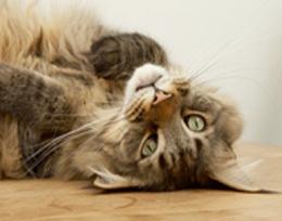 Bekijk video socialisatie kittens