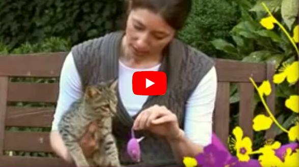 Whiskas Kittenclass Introductie Socialisatie filmpje