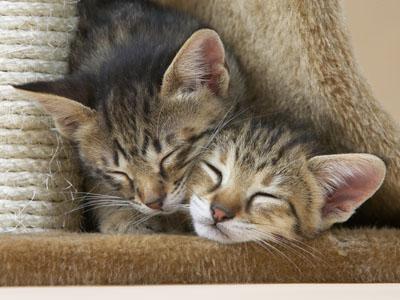 Een goede introductiebeleid voor een nieuwe kat in huis kan gedragsproblemen voorkomen.